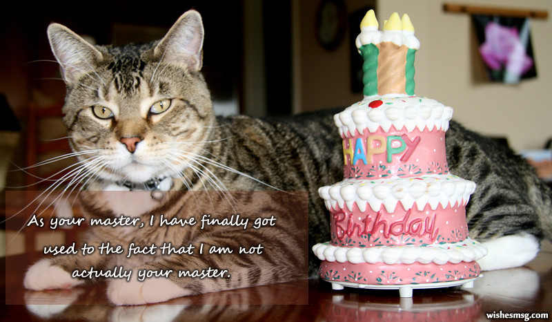 Birthday Wishes For Pet Cat 2