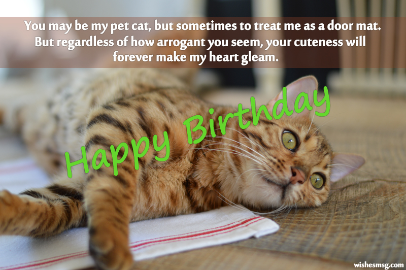 Birthday Wishes For Pet Cat 4