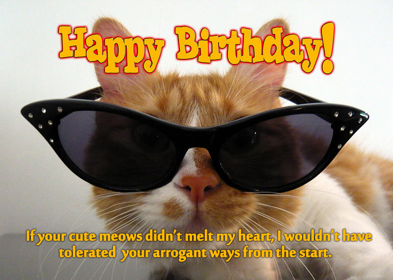 Birthday Wishes For Pet Cat 5