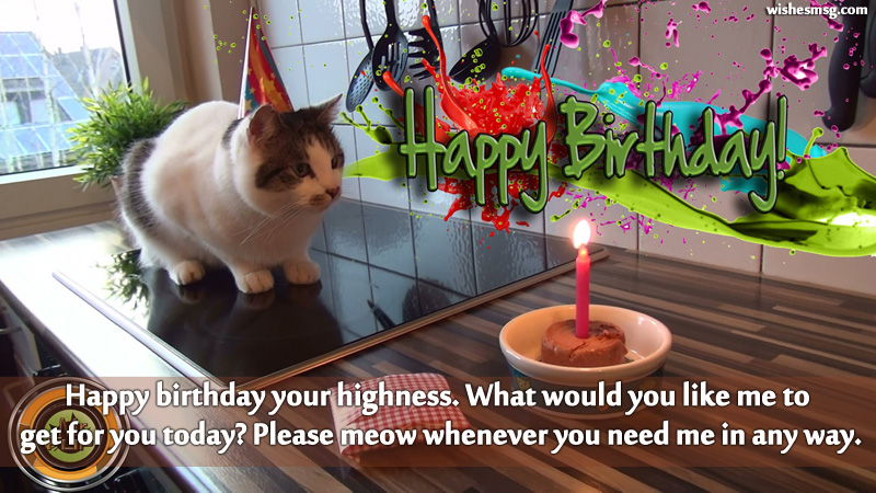 Birthday Wishes For Pet Cat 6
