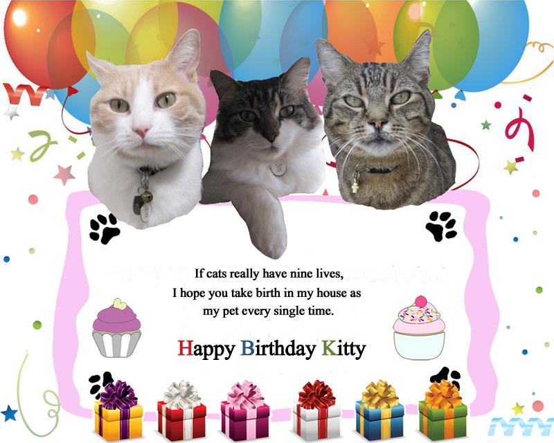 Birthday Wishes For Pet Cat 7