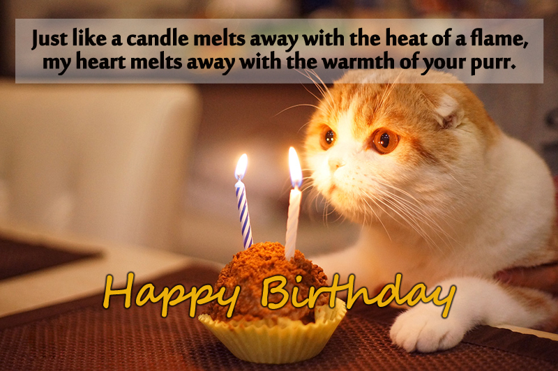 Best Birthday Wishes Message For Lovely Cat