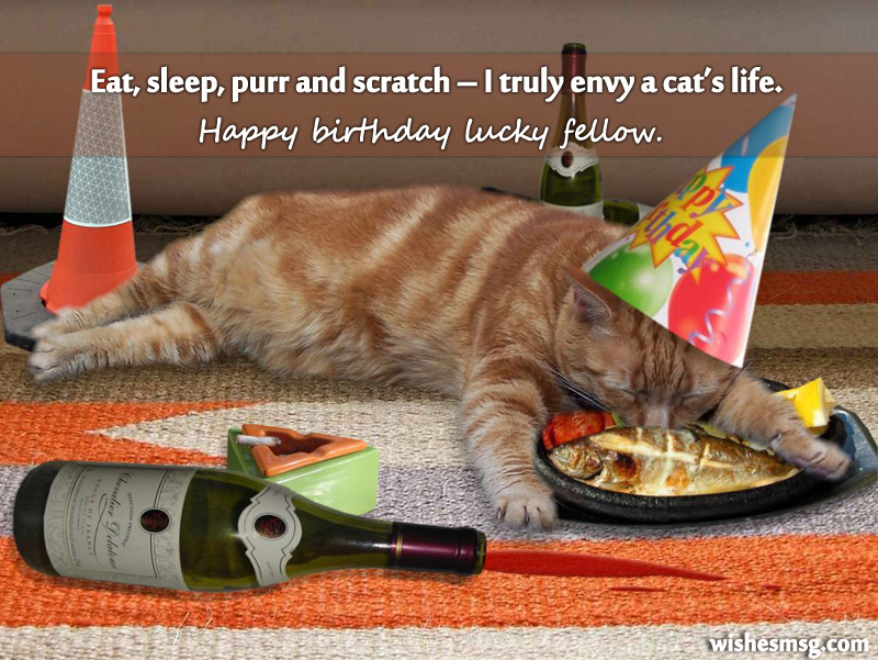 birthday-wishes-for-pet-cat-3