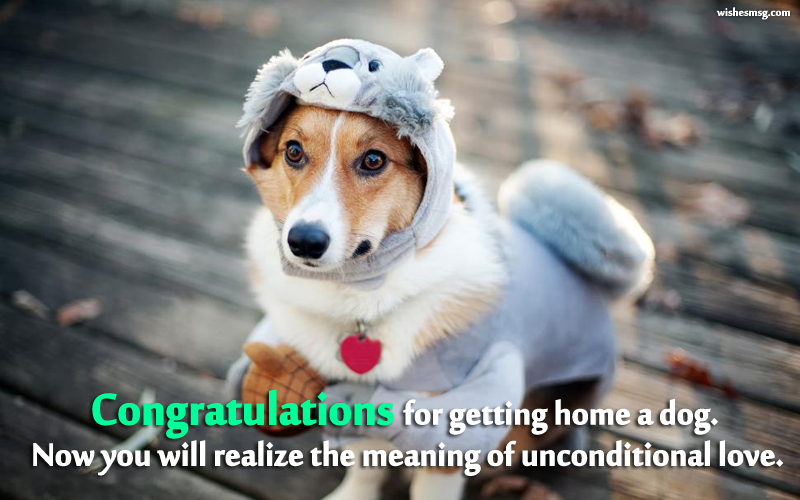 quotes for new dog