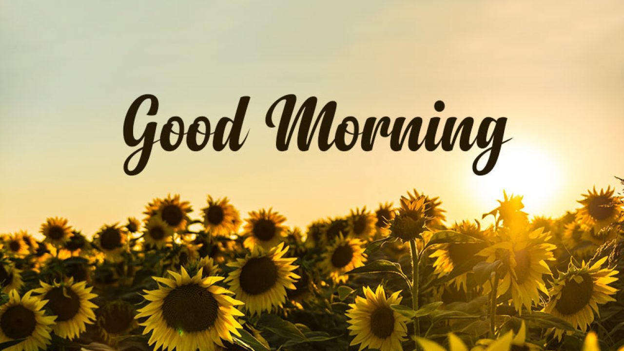 10+ Good Morning Messages, Wishes & Quotes - WishesMsg