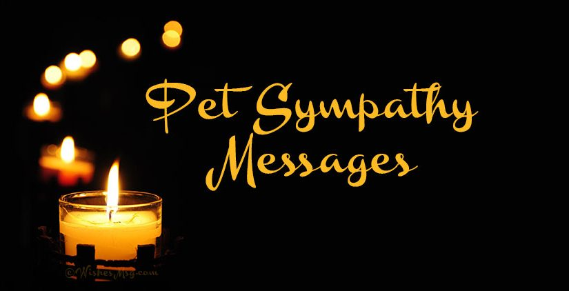 Condolences Message for Loss of Pet