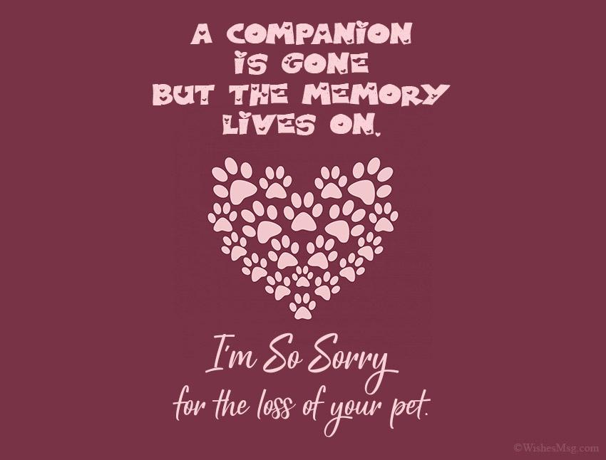Condolences for Loss of Pet