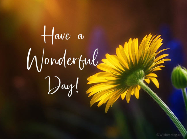 have-a-wonderful-day