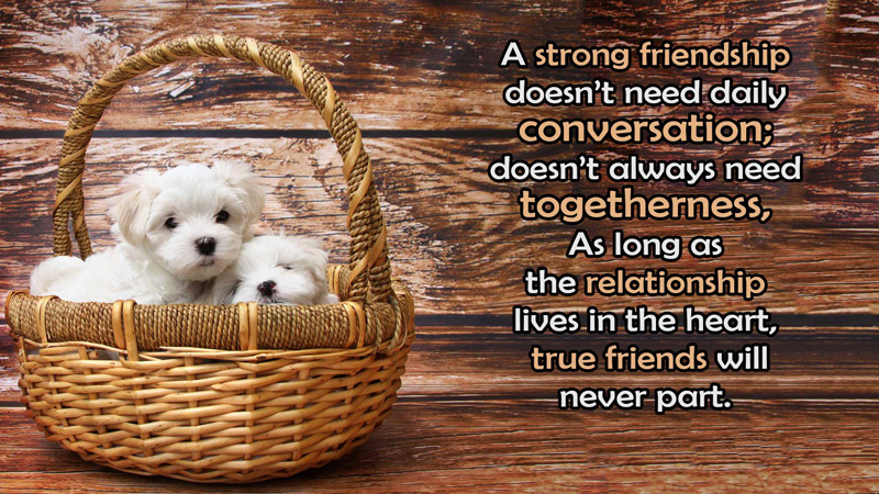 Long distance friendship messages and quotes for friends wishesmsg
